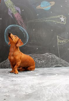Dachshund in space! One small step for doxies. One giant belly-flop for Dachshund kind! Love My Dog, Cute Puppies, Cute Dogs, Art Pulp, Chalk Photos, Funny Animals, Cute Animals, Sidewalk Chalk Art, Weenie Dogs