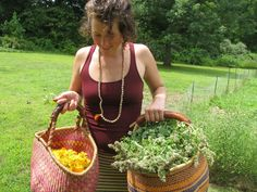 catnip and calendula harvest