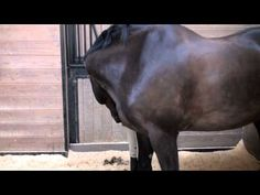 Get your horse off to the right start for clicker training (1 of 3 - De-spooking Series) - YouTube