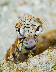 """Pipefish at Bohol by Jerome Kim.  """"Gold prize in Macro Division (Annual UW photo competition in Korea 2012)"""""""