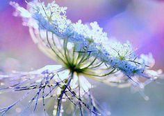 Pastel, fleur, nature, violet