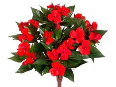 13.5' Silk New Guinea Impatiens Flower Bush -Tomato Red (case of 6) -- More info could be found at the image url.