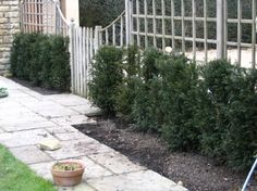 Example of yew hedges that DON'T work