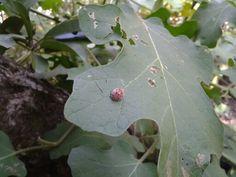 ladybug! All Plants, Ladybug, Plant Leaves, Lady Bug, Ladybugs