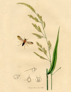 Antique Botanical Print with Insect! - The Graphics Fairy