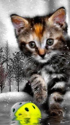 Kitten - Animation Telefon №1232787