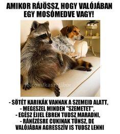 Wtf Funny, Comedy, Funny Quotes, Jokes, Lol, Animals, Meme, Magic, Fantasy