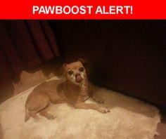 Please spread the word! Princess was last seen in Indio, CA 92201.