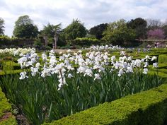 Doddington hall iris week