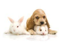 dander, bunny dander, ferret dander with the Pet Dander Air Purifier Black Cocker Spaniel, American Cocker Spaniel, Cocker Spaniel Puppies, Cute Friends, Best Friends, I Love Dogs, Puppy Love, Animals For Kids, Cute Animals