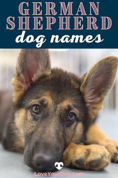 Looking for the perfect German Shepherd Dog Names? This list of over 200 different names will help inspire the perfect moniker for your pup!
