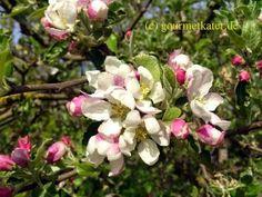 Gourmetkaters Garten: Hurra- Der Frühling ist da! #apfel #garden #flowers #fruits