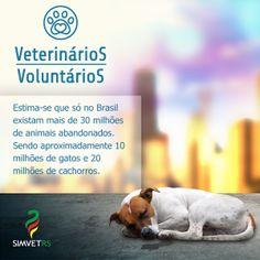 Campanha de Incentivo - SimvetRS
