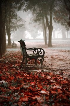 misty autumn morning... great place for your morning cup of tea.