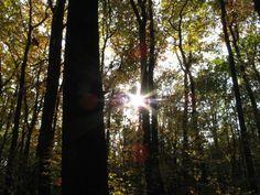 Slunce v podzimním lese