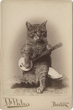 "Cat playing a banjo cabinet card. From the flickr page - ""I believe the photographer is Louis De Ribas, a Boston photographer who patented a drop shutter in 1887."""