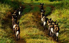 Laikipia wildlife | Sosian Safari Lodge Kenya | Luxury Safari Kenya