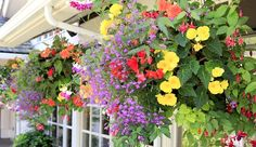 Hanging baskets, containers and flower pouches add a whole new dimension to gardening, helping to utilize all the available space. With hanging baskets and flower pouches you can brighten up a sunny wall, or with the right choice of plants, even add color to those tricky shady areas. Why not grow fresh herbs throughout the winter with an indoor basket next to a sunny window! 1. Lantana Lantana is a plant that is easy to grow and flourishes with even little moisture. This flower brings a…