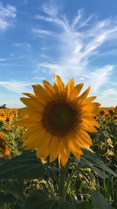 Luxury Sunflower Nature Wallpaper - Sunflower Nature Wallpaper Beautiful 💛💛💛 Wallpers Wallpers In 2019 Trendy Wallpaper, Tumblr Wallpaper, Aesthetic Iphone Wallpaper, Nature Wallpaper, Cool Wallpaper, Aesthetic Wallpapers, Cute Wallpapers, Iphone Wallpapers, Sunflowers And Daisies