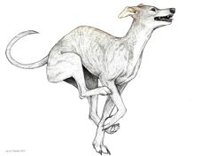 Dog Poses, Google Images, Grey, Drawings, Dogs, Gray, Pet Dogs, Sketches, Doggies