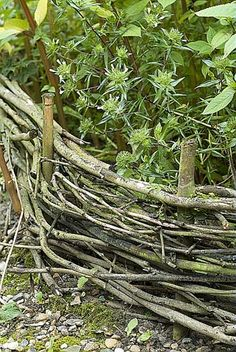 Fabriquer une bordure en plessis Le plessis est un assemblage de branches entrelacées. Originaire du Moyen Âge, il servait à clore, à bon prix, les pâtures par le simple jeu du pliage et de l'entremêlement de branches. Cet ouvrage est, aujourd'hui, très prisé des jardiniers pour son allure champêtre mais aussi par ce qu'il est facile à réaliser.