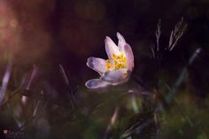 Blog, Plants, Pictures, Camera Tricks, Floral Rug, Nice Asses, Blogging, Plant, Planets