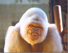 funny animals with teeth - http://ebooks2buy.biz/go/FunnyJokes.php