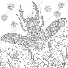 2 Coloring Pages Of Beetle From ColoringPageExpress Shop Hand Drawn Illustrations Both For Adults And