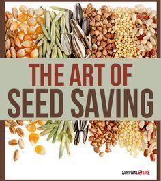 The Art of Seed Saving  | Survival Prepping Ideas, Survival Gear, Skills & Emergency Preparedness Tips - Survival Life Blog: survivallife.com #survivallife