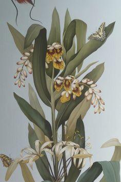 Détail planche botanique