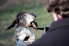 #Schlammwiss #uebersyren #natura2000 #wildlifephotography #luxembourg #igerslux #wanderlust #birding #birdwatching #nature #naturelovers #naturephotography #outdoors #ornithology #igerslux #naturephotography #eye_spy_birds #outsideisfree #ic_nature #ignature #ignaturefinest #ig_captures_nature #instanaturelover #allnatureshots #dezpx_birding #wearetheluckyones #dezpx #birdringingstationschlammwiss #birdringingstation (hier: Birdringingstation Schlammwiss)
