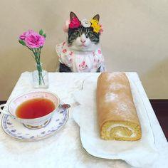 いいね!15.7千件、コメント329件 ― @rinne172のInstagramアカウント: 「和三盆ロールでティータイム☕️ #cat#cats#catstagram#catsofinstagram…」