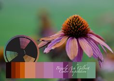 Beverly Ash Gilbert: Color Inspiration - Faded Cornflowers   ♥