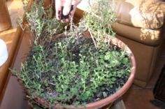 Home grown herbs - an easy way to make cooking from scratch tasty.