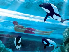Aquatica in Orlando, Florida, features a truly revolutionary enclosed tube slide that sends visitors through a clear lagoon inhabited by actual Commerson's dolphins for a thrill ride/natural attraction quite unlike any experienced before!