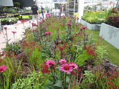 Small Gardens, Outdoor Gardens, Prairie Garden, Flower Garden Design, Garden Types, Landscaping Plants, Garden Planters, Colorful Garden, Amazing Gardens