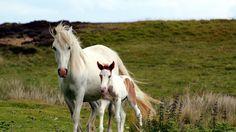ANIMALS TIME : Horses time (Hora de los caballos)