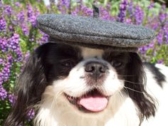 Paw-risian pooches can channel their inner Francophile with this beret!