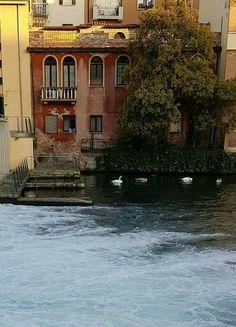 Treviso, citta' di terra e d'acqua. Particolare dela Riviera - cascata sul Ponte San Martino. Casa rossa, verde, cigni.