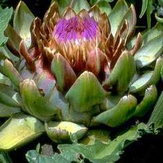 Artichoke: One of the best detox foods for your liver, artichokes are also low in calories and contains compounds that can help lower your cholesterol levels. Healing Herbs, Natural Healing, Natural Medicine, Herbal Medicine, Best Detox Foods, Healthy Foods, Home Remedies, Natural Remedies, Lower Your Cholesterol
