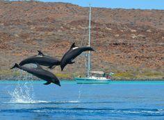 """""""Delfines de los Juguetones"""" by Carolina Bastida Davis. Picture via https://www.facebook.com/SECTURBCS"""