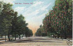 Holt Avenue-Street Scene-Pomona-CA-California-Vintage 1910 Postcard