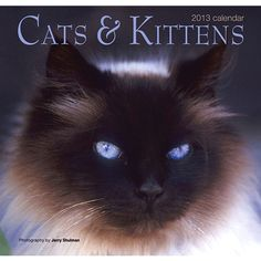 Cats & Kittens Wall Calendar: This calendar has twelve amazing felines to keep you company as you move through the year.  http://www.calendars.com/Kittens/Cats-and-Kittens-2013-Wall-Calendar/prod201300003232/?categoryId=cat00186=cat00186