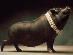 """""""Diamantes para los cerdos"""""""