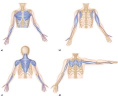 To truly understand fascia recoil you must first understand the fascia system. Fascia is the soft tissue that holds us together and it has more nerve activity than muscle! Fascia permeates the entire body and literally connects to every structure from h Fascia Stretching, Fascia Blasting, Migraine Pain, Pilates, Yoga Anatomy, Muscular System, Massage Techniques, Drawing Techniques, Massage