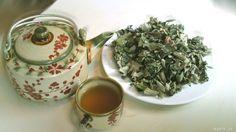 4 cách dùng trà lá sen hiệu quả. | Trà Lá Sen - Trà Thảo Dược Giảm Cân An Toàn Tea Pots, Food And Drink, Tableware, Nevada, Healthy Recipes, Dinnerware, Dishes, Tea Pot
