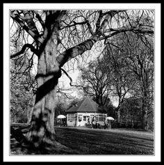 The Phoenix Park Tea Rooms Old Photos, Vintage Photos, Ivy Rose, Book Of Life, Days Out, St Patricks Day, Dublin, Tea Time, Phoenix