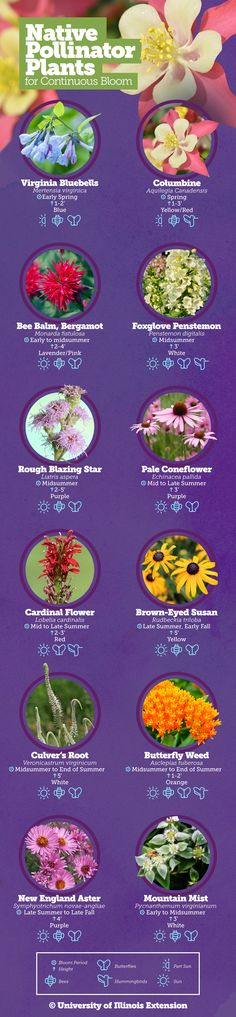 Learn how to support pollinators with native plants in Illinois.