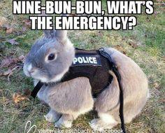 So cute 🐇i love bunnys Funny Bunnies, Baby Bunnies, Cute Bunny, Bunny Bunny, Animals And Pets, Baby Animals, Funny Animals, Cute Animals, Nature Animals