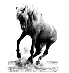 Dancer via @maskedhorse #fineart #photography #interior #inspiration…